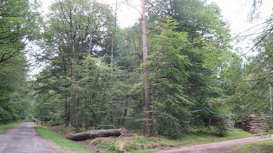 Verzy, Frankrike: forêt