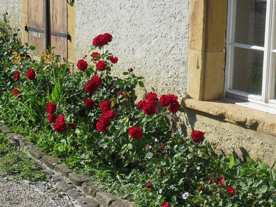 Erlach, Szwajcaria: flowers