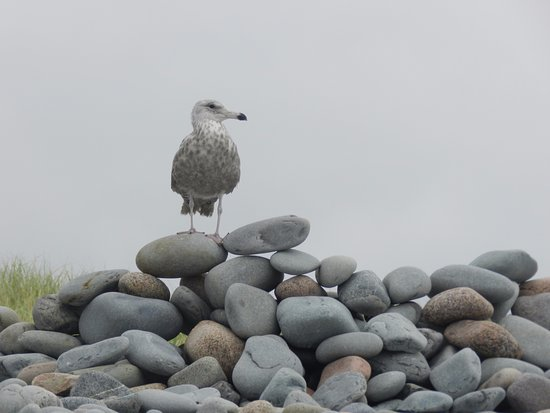 East Lawrencetown, Canada: Rocks as big as gulls