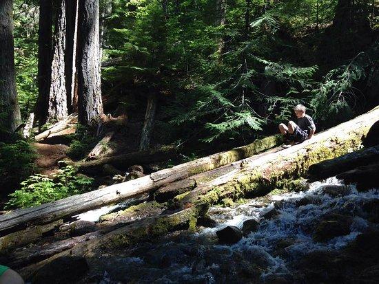Sisters, OR: Kids had fun climbing logs toward the base of Proxy Falls, OR