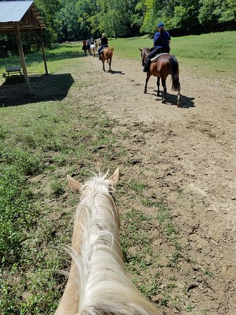Schooner Valley Stables: View from the back of Dandy!