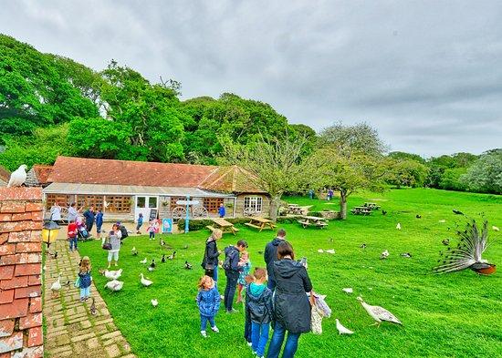 Calbourne Water Mill & Rural Museum