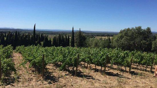 Cantallops, Spanje: IMG-20160807-WA0008_large.jpg