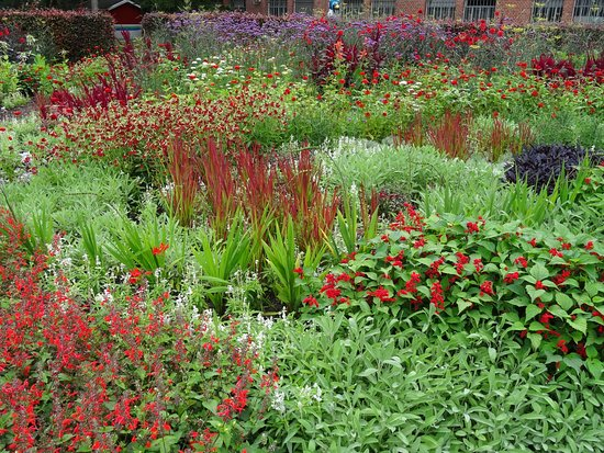 Maximilianpark: bunte Blumenwiese