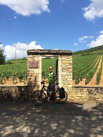 Pommard, Francia: The vineyard area near Santenay by bicycle.