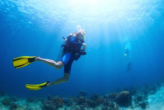 Shore diving maui picture of scuba mike lahaina - Dive byron bay ...
