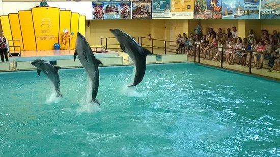Gelendzhik Dolphinarium