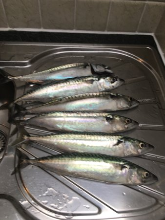 Mevagissey Mackerel Fishing Trips