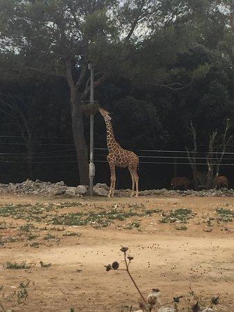 Parc Zoologique Henri de Lunaret: photo1.jpg