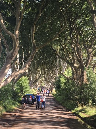 The Dark Hedges: Breathtaking!
