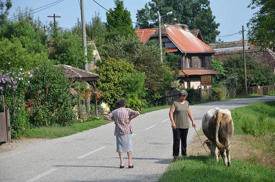 Sisak-Moslavina County, Croatia: traffico nel centro di Cigoc :)