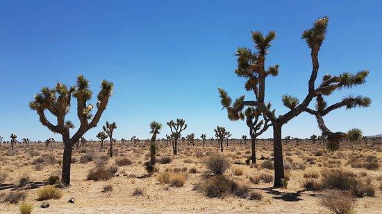 Twentynine Palms, Kalifornien: 20160807_135633_large.jpg