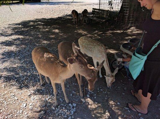 Lagoon Deer Park: IMG_20160808_142651_large.jpg