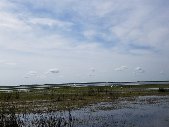 Geneva, Floride : Beautiful marshland and wildlife
