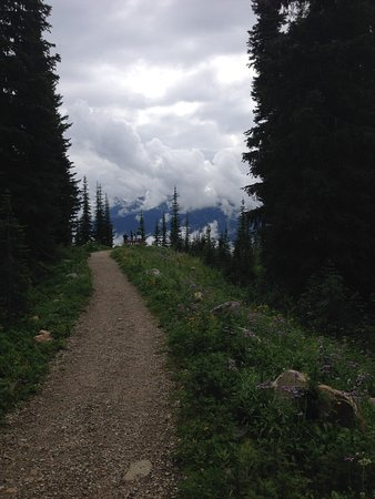 Mount Revelstoke National Park: Beautiful wildflowers everywhere!