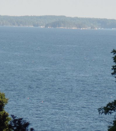 A view from infront of our room acroos Route one to the Bay in Belfast Maine