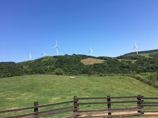 Daegwanryeong Samyang Ranch