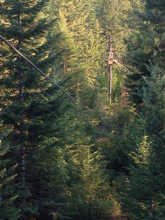 Timberline Adventures照片