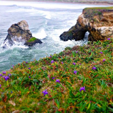 The Sea Ranch, CA: Unbeaten Path Tours