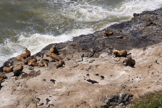 Флоренция, Орегон: sea lions on rocks