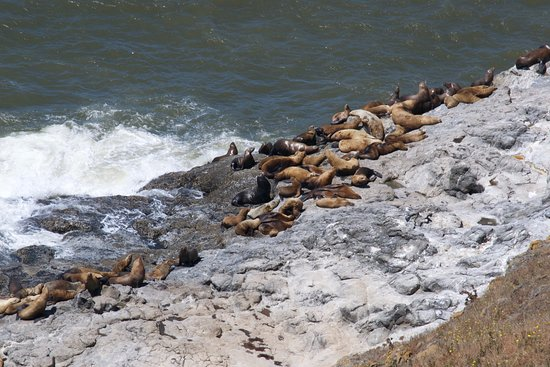 Florence, OR: sea lions on rocks