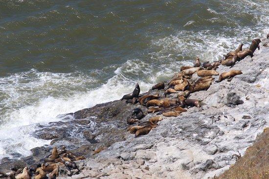 Флоренция, Орегон: sea lions on rocks