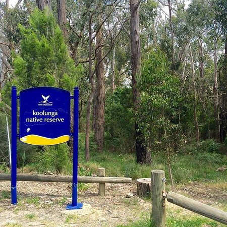 Ferntree Gully, Australia: Great spot maintained by dedicated volunteers