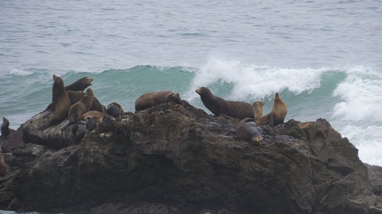 Shelter Cove, Californien: Sea Lions relaxing at the beach