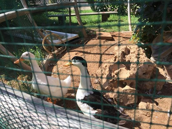 Belconti Resort Hotel: мини- зоопарк
