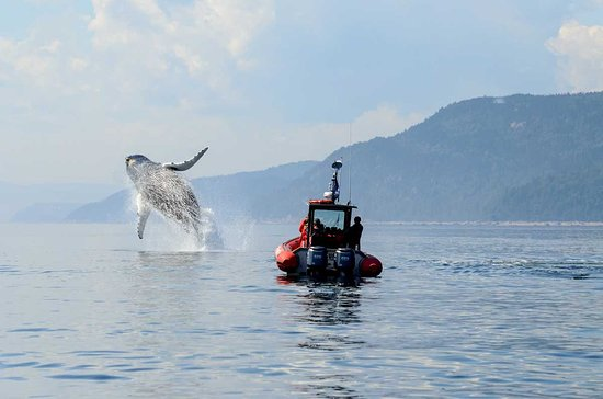 Tadoussac, Canada: with the zodiac you are 100 % sure of seing whales, beluga, dalphins, ect...