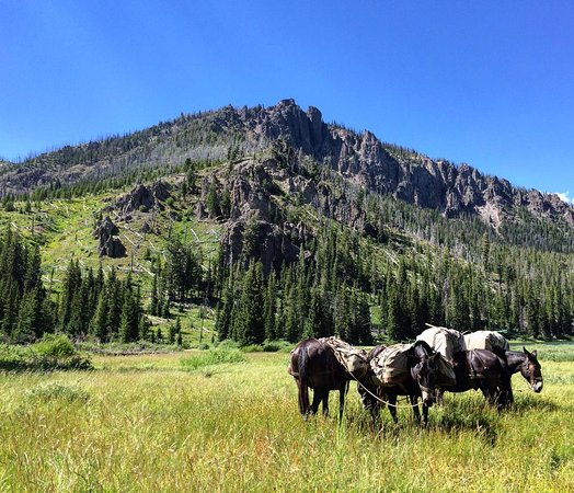 Rockin' HK Outfitters: The pack mules all loaded up and ready to go!