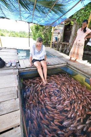 Lagoon Herbal Garden: Fish Feeling