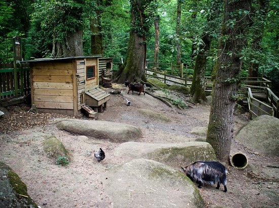 Manaton, UK: Some of the animals at Becky Falls