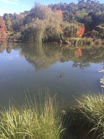 The Tasmanian Arboretum: photo0.jpg