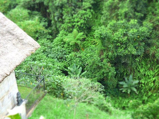 Anhera Suite: View down to the jungle