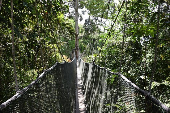 Poring Treetop Canopy Walk the canopy walk & the canopy walk - Picture of Poring Treetop Canopy Walk Kota ...