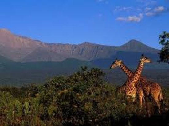 3crest Tours & Safaris