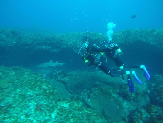 Umkomaas, Sudafrica: Diving with Warren and the Raggies a great experience