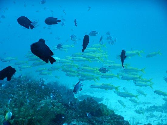 Merlin Divers - Kamala Diving Center: Lots of fish to see at Racha Yai