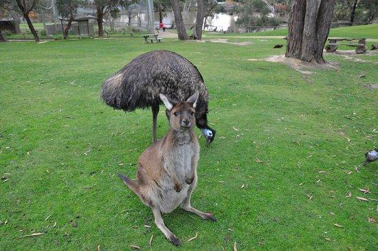 images ballarat wildlife - photo #40