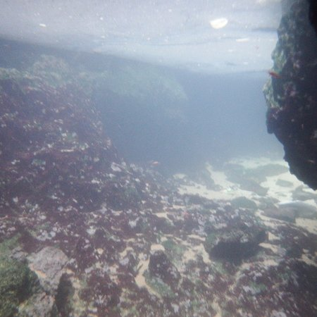 Busuanga Island, Φιλιππίνες: Underwater in the lake inside the cave of Black Island #2