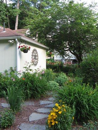Granby, MA: White Rose gardens