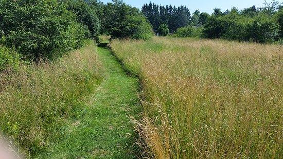 Machias, ME: Green space at Middle River Park