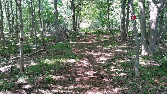 Machias, ME: Exploring the wooded paths at Middle River Park