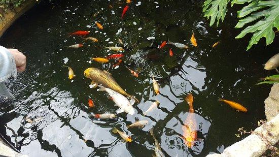 Inverness Botanic Gardens: 20160809_100754_large.jpg
