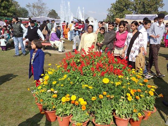 Chandigarh Rose Garden: A FAMILY AROUND FLOWERS