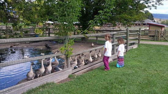 Vernon, كندا: Lots to see in the animal area - very friendly geese here!