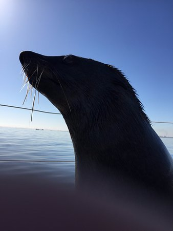 Catamaran Charters: The seals are lured on board with fish