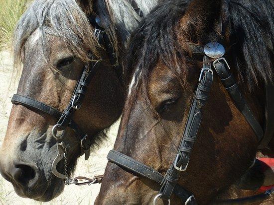 De Waal, Países Bajos: Twee Kanjers van Paarden.