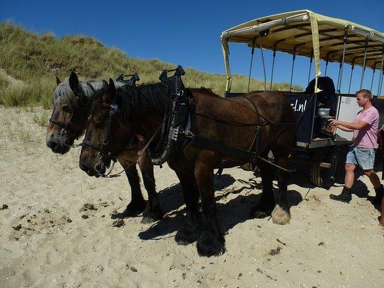 De Waal, Países Bajos: Gijs met zijn Paarden-Span.
